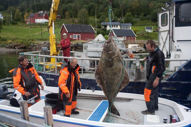 Halibut record - 87 kg