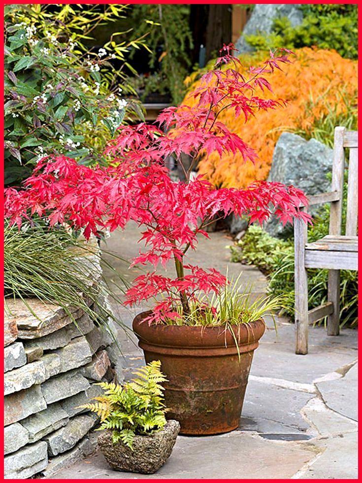Inspirierende Japanische Gartenrandideen Auf Dieser Lieblingsseite Auf Dieser Gartenrandideen Inspirierende Japanische Li Japanese Garden Design Garden Pots Garden
