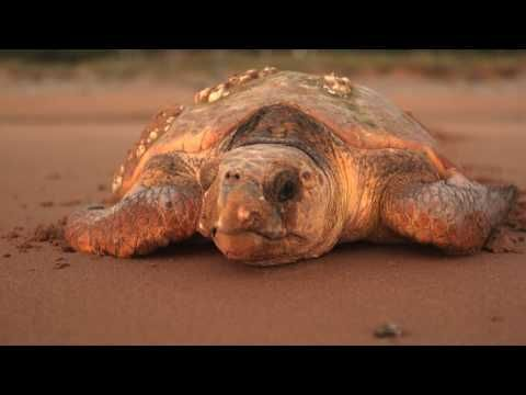 I know just the place: Cathy Gatley, Mon Repos Conservation Park, Bundaberg - YouTube