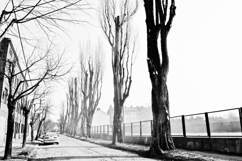 Bare winter trees line the road in Pabianice, Poland.