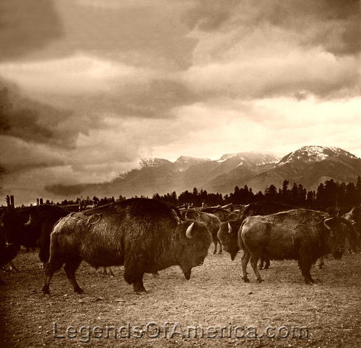 Swingers in forsyth montana