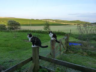 Living the Reasonably Good Life: Gardening with cats and chickens