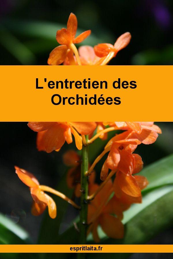 Comment Soigner Une Orchidee Entretien Orchidee Faire Refleurir