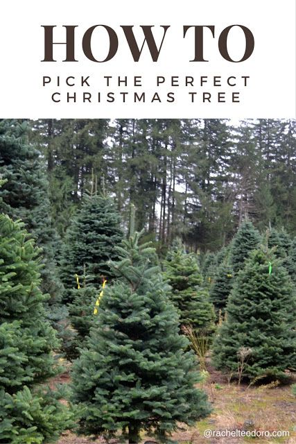 How to Pick the Perfect Christmas Tree  ItsChristmasKeepItReal AD