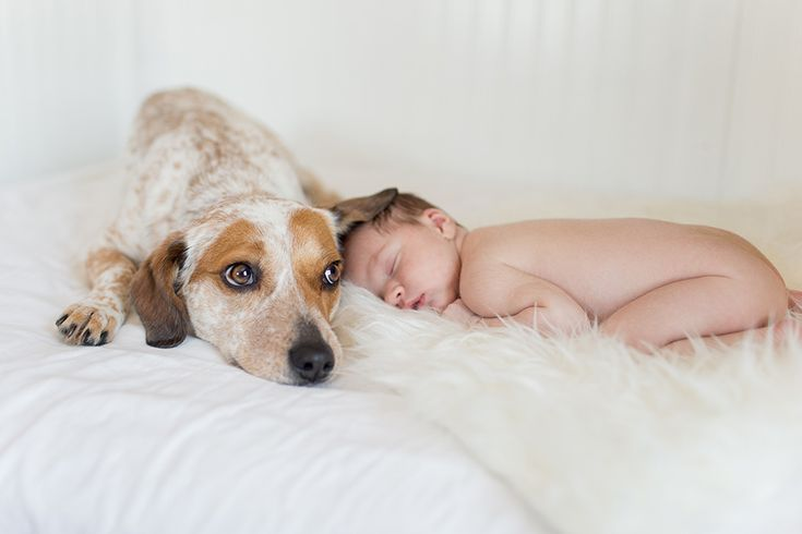 Can't ever have enough dog and newborn photos!! Love this sweet sleeping baby on the white fur rug.