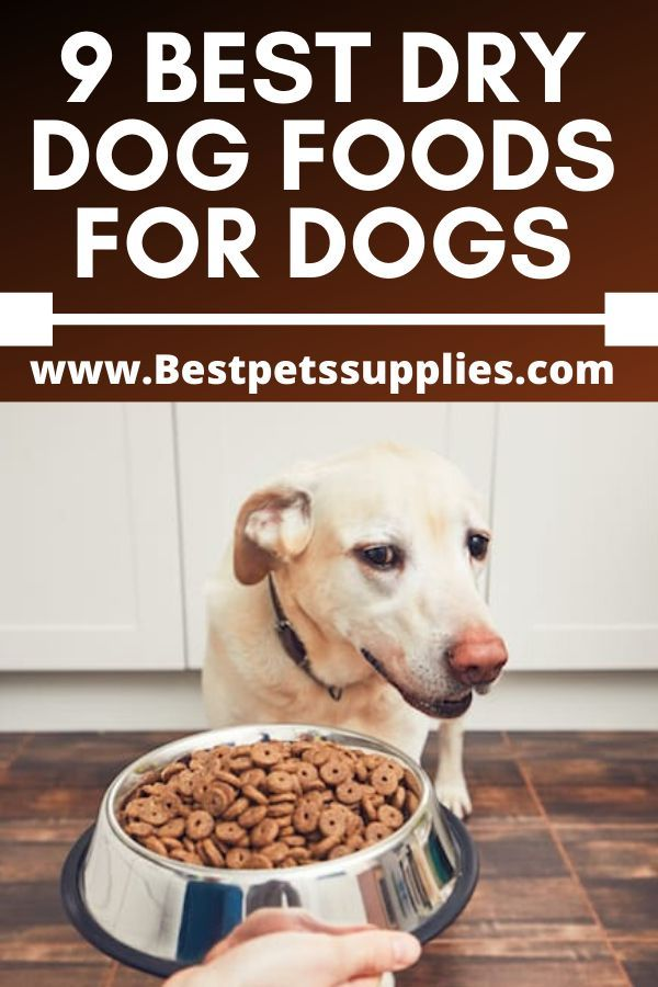 10 Best Dry Dog Food Brands In 2020 Dog Food Recipes Best Dry Dog Food Best Dog Food Brands