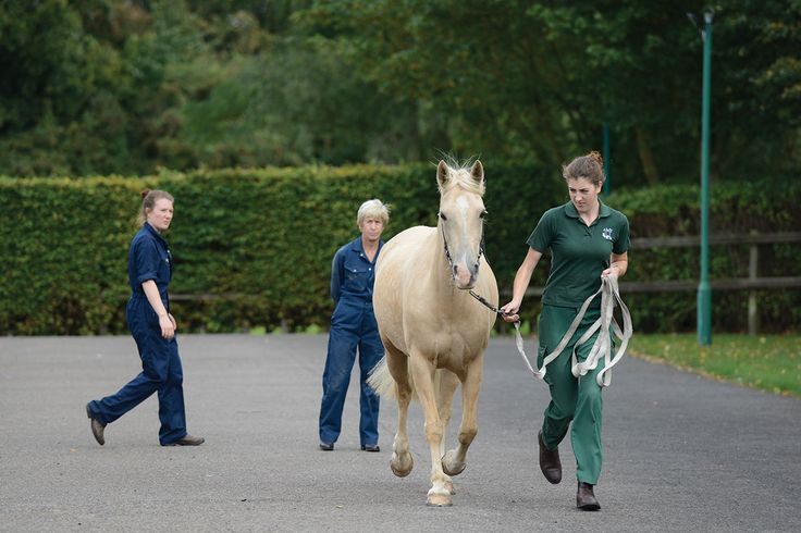 Would you know if your horse was lame? It's not always as obvious as noticing a limp, as vet Annamaria Nagy from the Animal Health Trust explains how to spot lameness