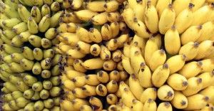 After Reading This, You'll Never Look at a Banana in the Same Way Again http://www.realfarmacy.com/after-reading-this-youll-never-look-at-a-banana-in-the-same-way-again/