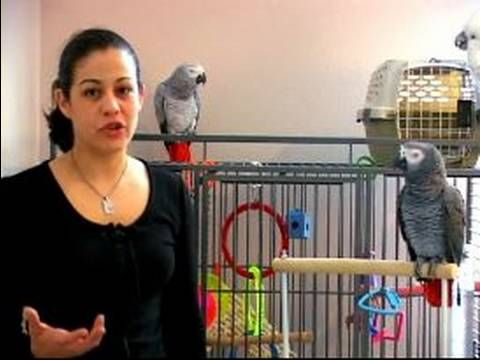 how to take care of a baby quaker parrot