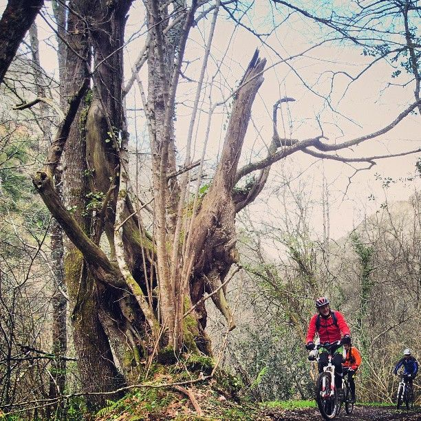 Por los bosques del oriente asturiano, #CangasdeOnís #Asturias
