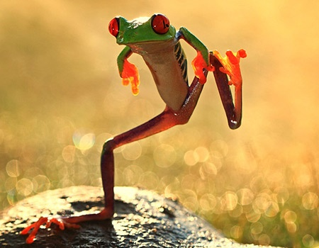 let's dance frog; shikhei gohGangnam Style, Nature, Lets Dance, Animal Photography, Trees Frogs, Looney Tunes, Macro Photography, Funny, Dance Frogs