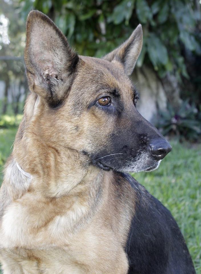 Dog Rescue Oakland Park Fl