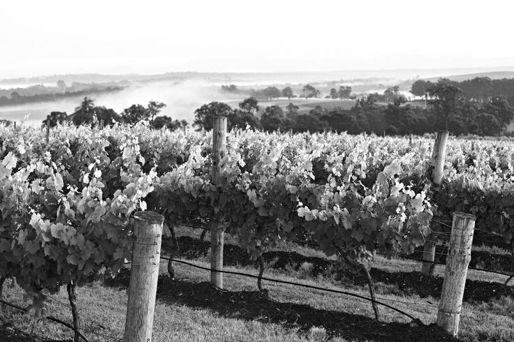 Scarborough Wines Hunter Valley Vineyards #wine