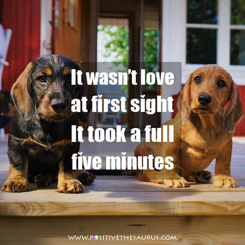 "Love quote ""It wasnt love at first sight. It took a full five minutes."" #PositiveSaurus #QuotesSaurus #LoveQuotes #Love #Puppies http://www.positivethesaurus.com/2016/07/list-of-synonyms-for-love-and-synonyms-for-beloved.html"