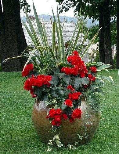Eu amo Plantas em vasos