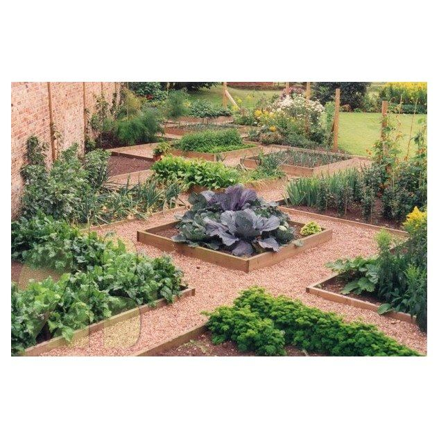 19 best images about vegetable garden layout ideas on for Organic vegetable garden design
