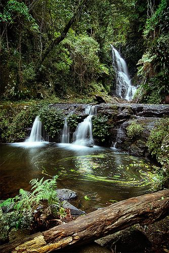 Elebana Falls , O'Reilly's & Lamington National Park Brisbane Qld. Australia