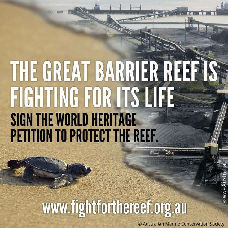 Fight for the reef!