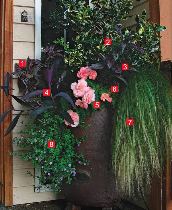 17 best images about get potted on pinterest fall containers container design and wandering jew - Container gardens for shade ...