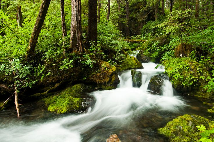 stream through temperate rainforest, Tongass National Forest, Sitka, Alaska