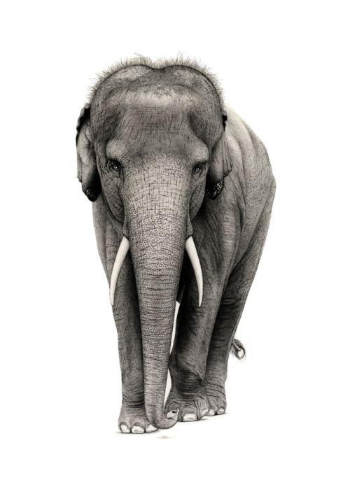 Реалистичные рисунки животных Ferdy Remijin