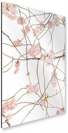 Nice artboxONE Galerie Print cm Floral Japan Kirsch rosa hochwertiges Acrylglas auf Alu Dibond Bild u Wandbild Floral Kunstdruck von Tan Kadam