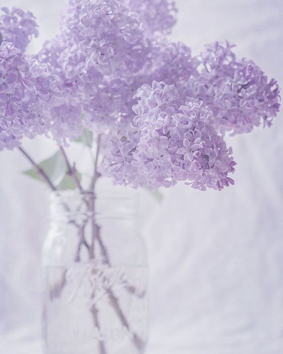 "Flower Photograph, Lilac Flowers in a Mason Jar, Fine Art Photography, Lavender Purple, White, Shabby Chic Wall Art, 8x10 to 24x30 ""Lilacs"""