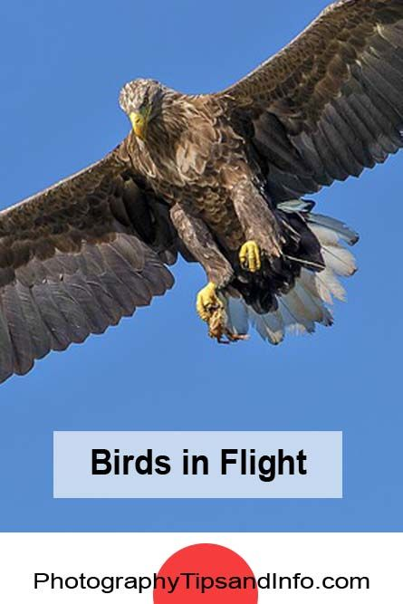 great tips on how to capture birds in flight. Learn about the aperture settings, shutter speeds and ISO settings that you can use in order to get the best shot.