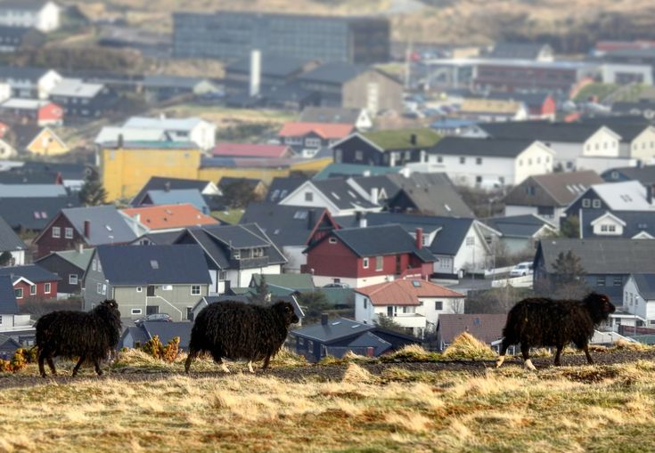 Islandia - Blog