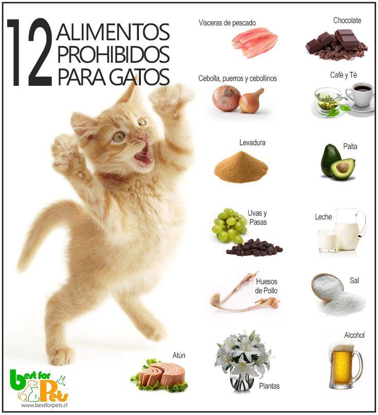 Si todavía no conoce cual es la alimentación prohibida para los gatos, le animamos a leer nuestro listado con los 12 alimentos que nunca debería darle a su minino;) Best for Pets