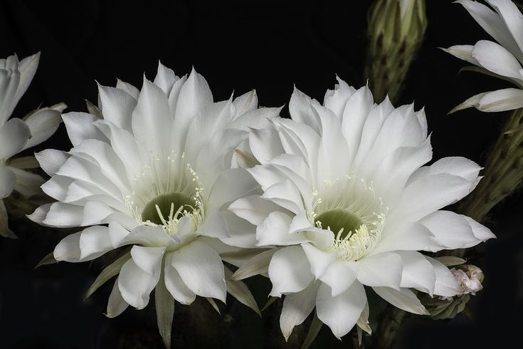 Looking For Alaska Flower: 25+ Best Ideas About Small Cactus Plants On Pinterest