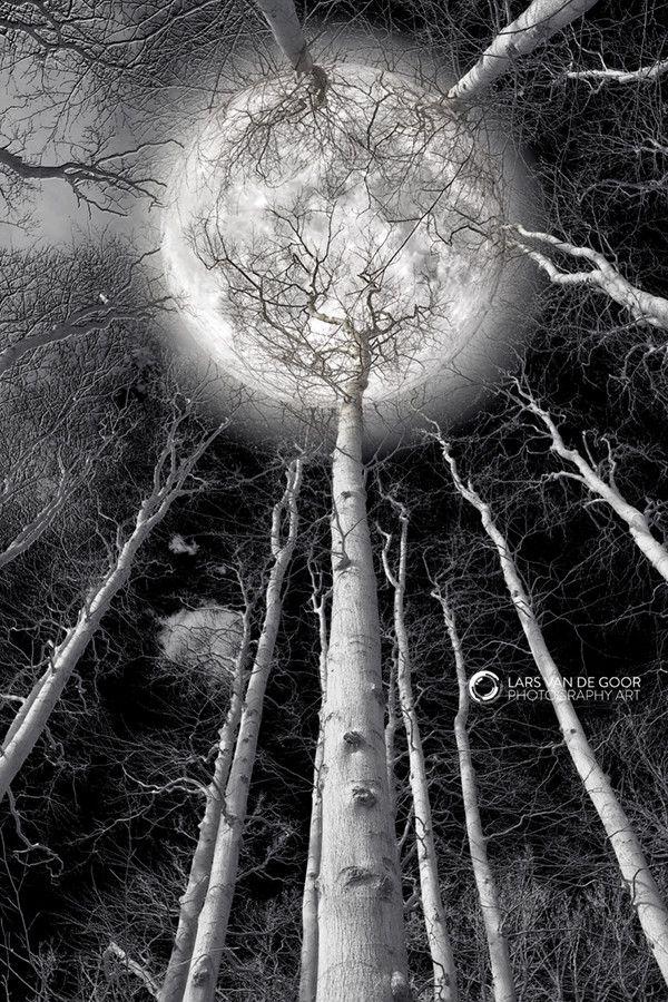 Super Moon by Lars van de Goor