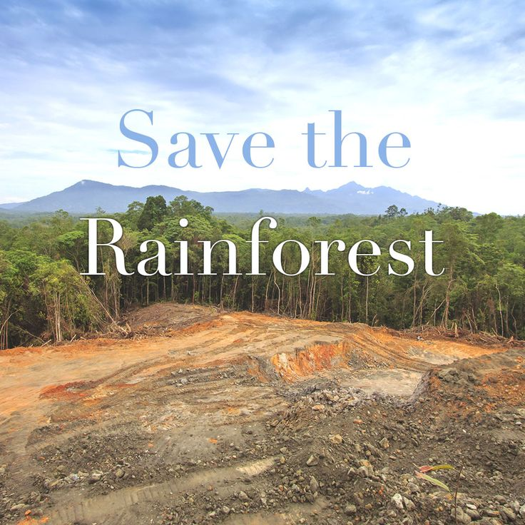 Rainforest and habitat of endangered species is being destroyed to make way for palm oil plantations. Palm oil is commonly used in cosmetics and our Palm Oil Alert list is coming your way soon!  #cosmethics #cosmetics #palmoil #savetherainforest #smartchoices #saveendangeredspecies #ethicalchoices #sustainableplamoil