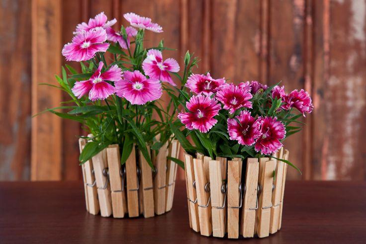 Artesanato com pregador de roupa: vasinhos para plantas colocados em copos descartáveis de plástico  Veja mais utilidades para eles aqui: http://casa.abril.com.br/materia/faca-voce-mesmo-artesanato-com-pregador-de-roupa?utm_source=redesabril_casas&utm_medium=facebook&utm_campaign=redesabril_casacombr