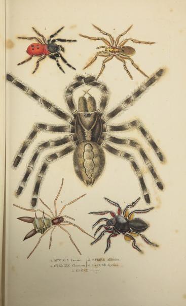 plus de 25 id es uniques dans la cat gorie toile d araign e dessin sur pinterest tatouage de. Black Bedroom Furniture Sets. Home Design Ideas