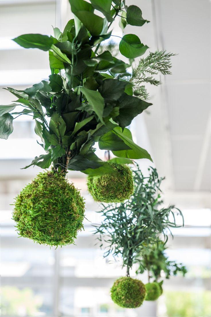 Kokedamas. Jardin japonais suspendu. Création et réalisation Adventive, agencement végétal d'intérieur. Interior plant Designer