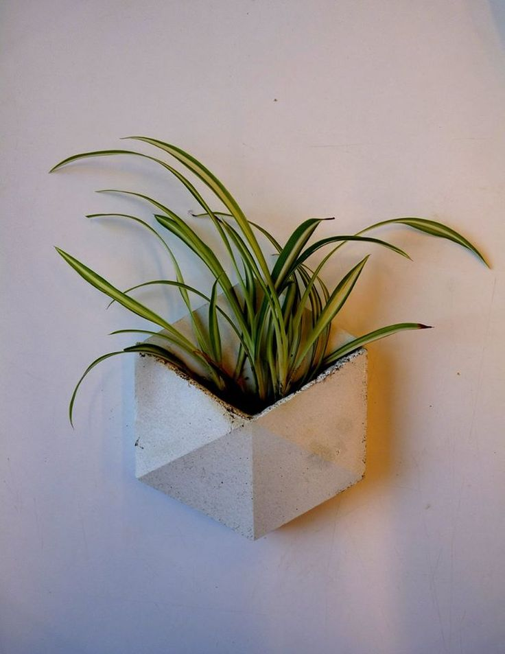 Concrete tile with plant