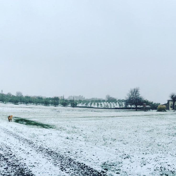 This is how we woke up this morning!  #snow #mugello #tuscany