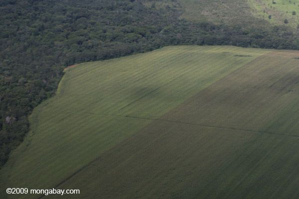 Picture: Soy field abutting against tropical forest in Brazil