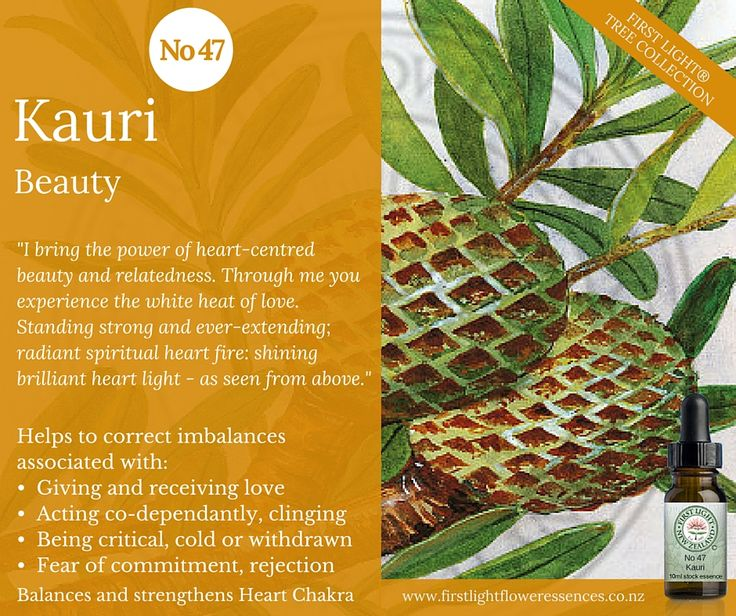 Kauri – Beauty - balances, strengthens, protects, energises and clears the heart chakra – the centre through which one experiences a sense of self. Stimulates the flow of love and helps facilitate a deep empathy with all of life. Use to address conditional love which can express as insincere love that seeks rewards and payoffs; to address jealousy, possessiveness and demanding behaviour in relationships. Helpful for those prone to indecisiveness, uncertainty or ambivalence in love.