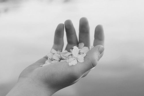 //: Photos, Hands, Flowers Flowers, Beautiful, Posts, Pretty