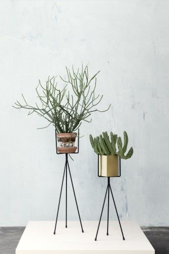Awesome way to display your plants!
