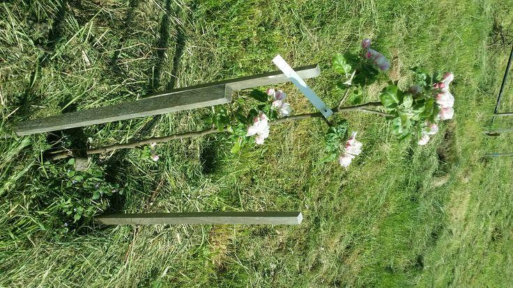 R44 Smiricke vzacke semenac