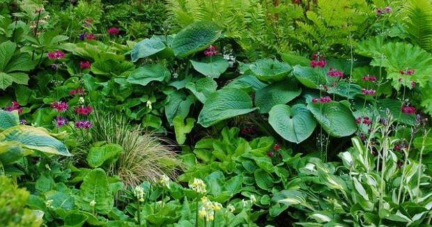 Blog Ogrodniczy Zupelnie Z Innej Strony Rosliny I Ich Wartosci Uzytkowe Plants