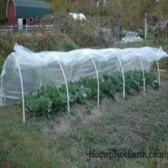 Low tunnels are easy structures to build to protect your winter veggies. Keeping the covers on in windy conditions can be a challenge. Learn simple steps you can take to make your low tunnel covers stable, no matter what the weather brings.