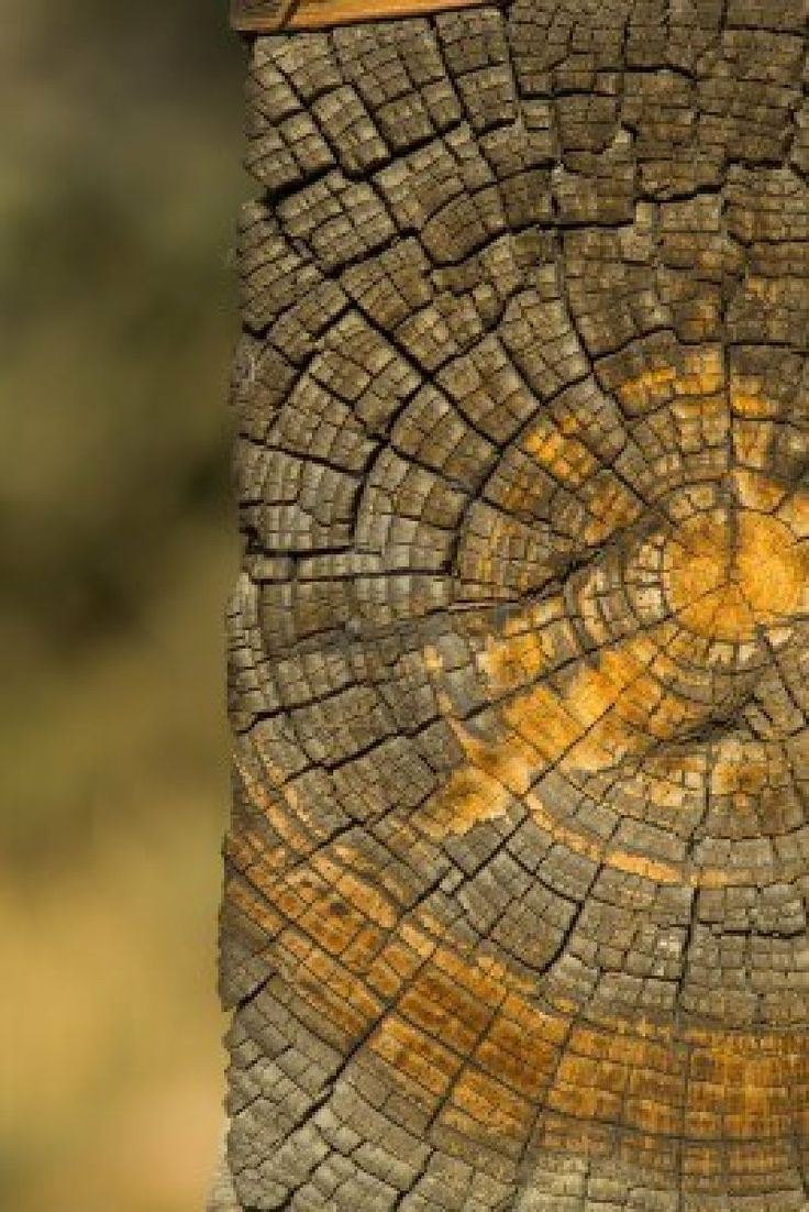 Old log end with growth rings