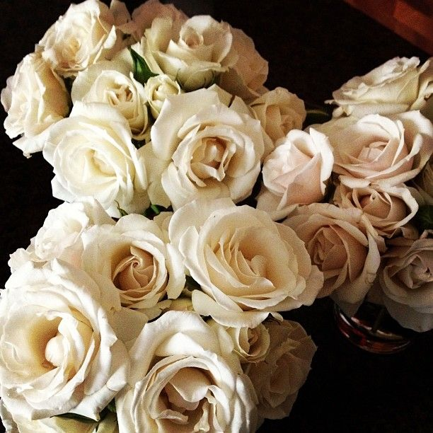 Majolica roses - these little spray roses come in a range from creamy near-white to taupe, to a pale blush. When they open all the way, they have a beautiful golden center.