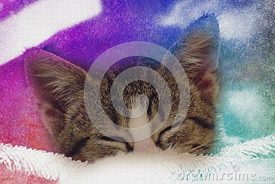 Cute baby kitten sleeping on pillow. Color background.