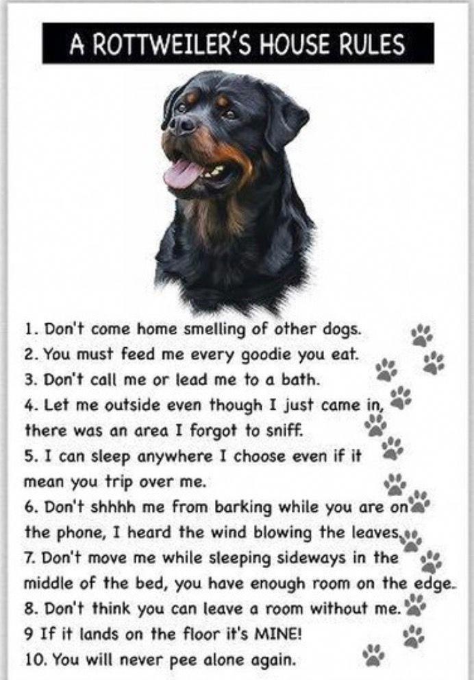 Sandiegodog Dogadventures Letsbefriends Dogsarethebest Cutestdogever Dogsarefamily Dogsrule In 2020 Rottweiler Rottweiler Love Rottweiler Dog