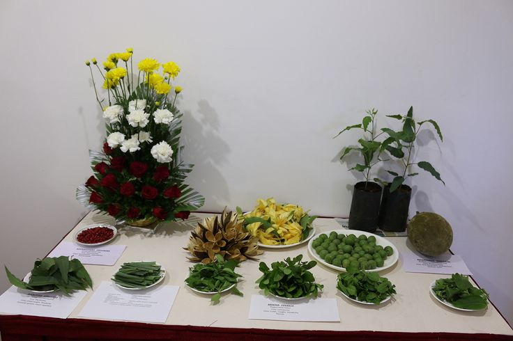 A Display of a Variety of Herbal Plants